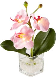 LED orchidej (1 ks), bpc living bonprix collection
